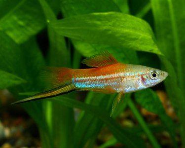 boyu fish tank instructions
