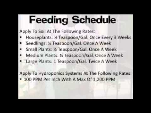 vigoro weed and feed instructions