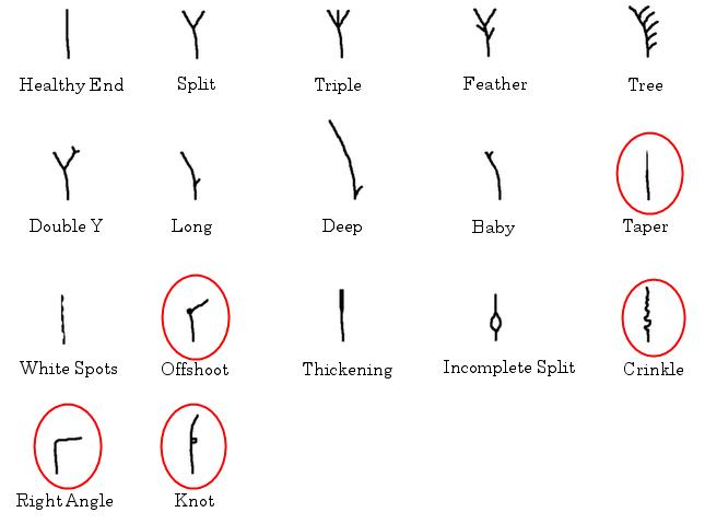 aveda split end repair instructions