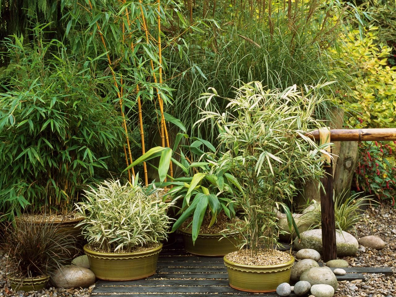 planting bamboo in pots instructions